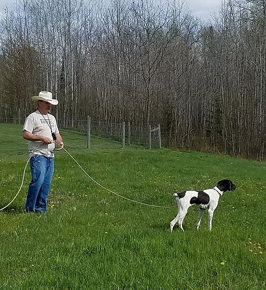 check cording a dog