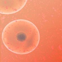 Phergain-2 Clinical Trial