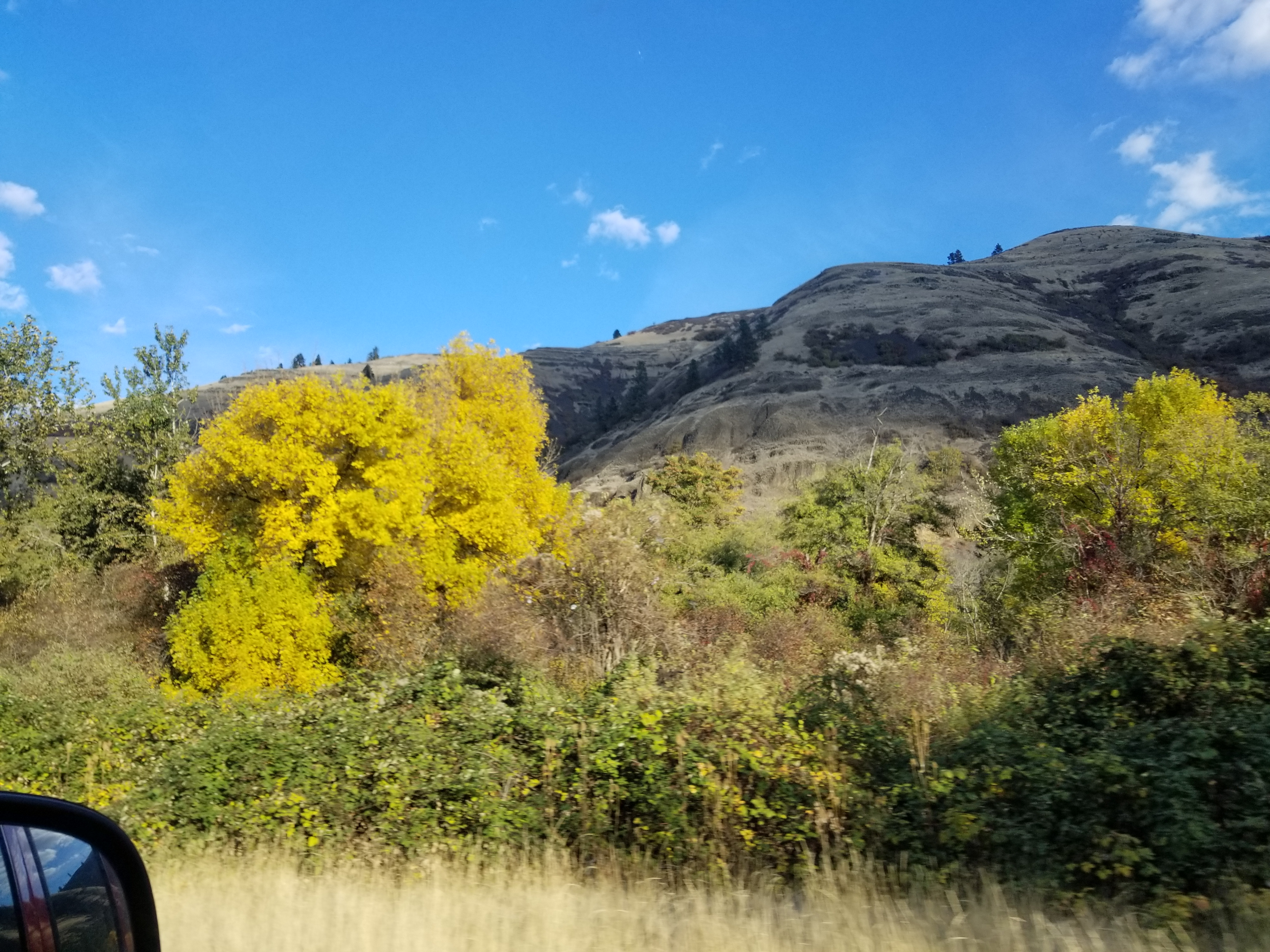 the color of fall on mountain