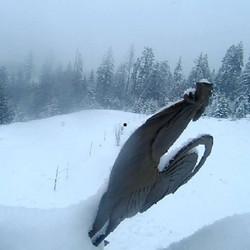 snowing.jpg lucid captures snow great