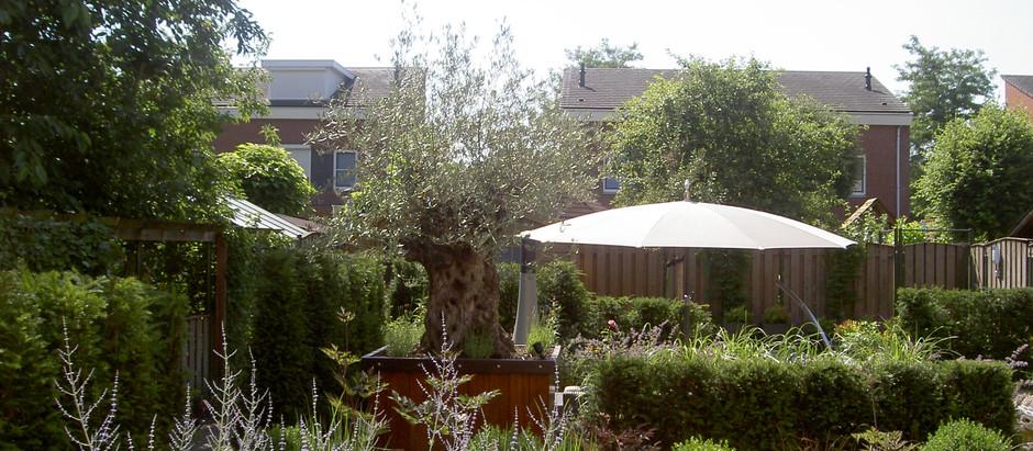 Een strakke groene tuin