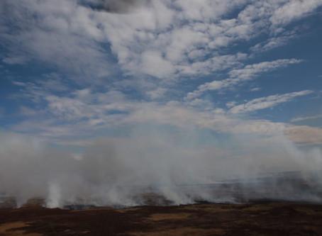 El Delta del Paraná nuevamente en llamas.