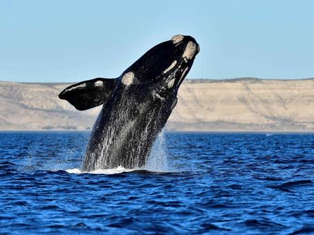 ¿Por qué es necesaria una Ley de Biodiversidad en Argentina?