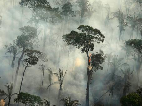 Cuatro formas en las que el uso de datos puede detener la deforestación.