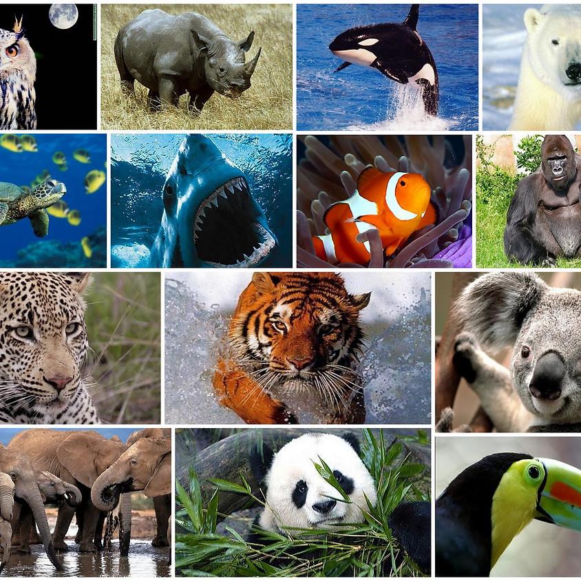Proyecto: Ley de Diversidad Biológica