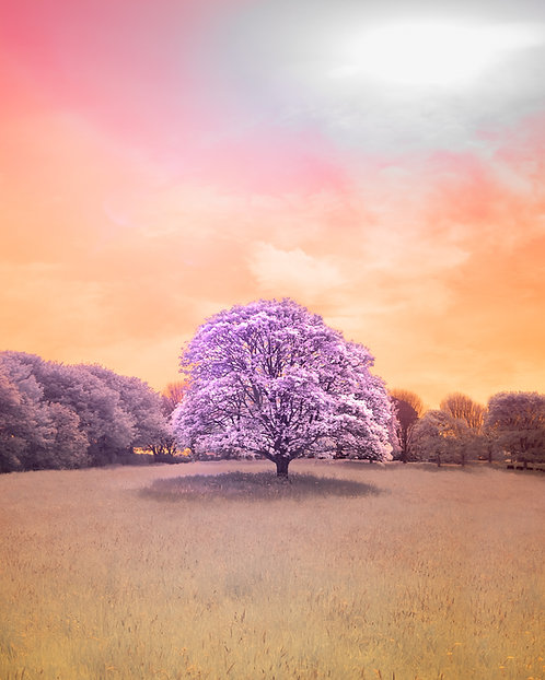 Val De Terres Tree - Infrared