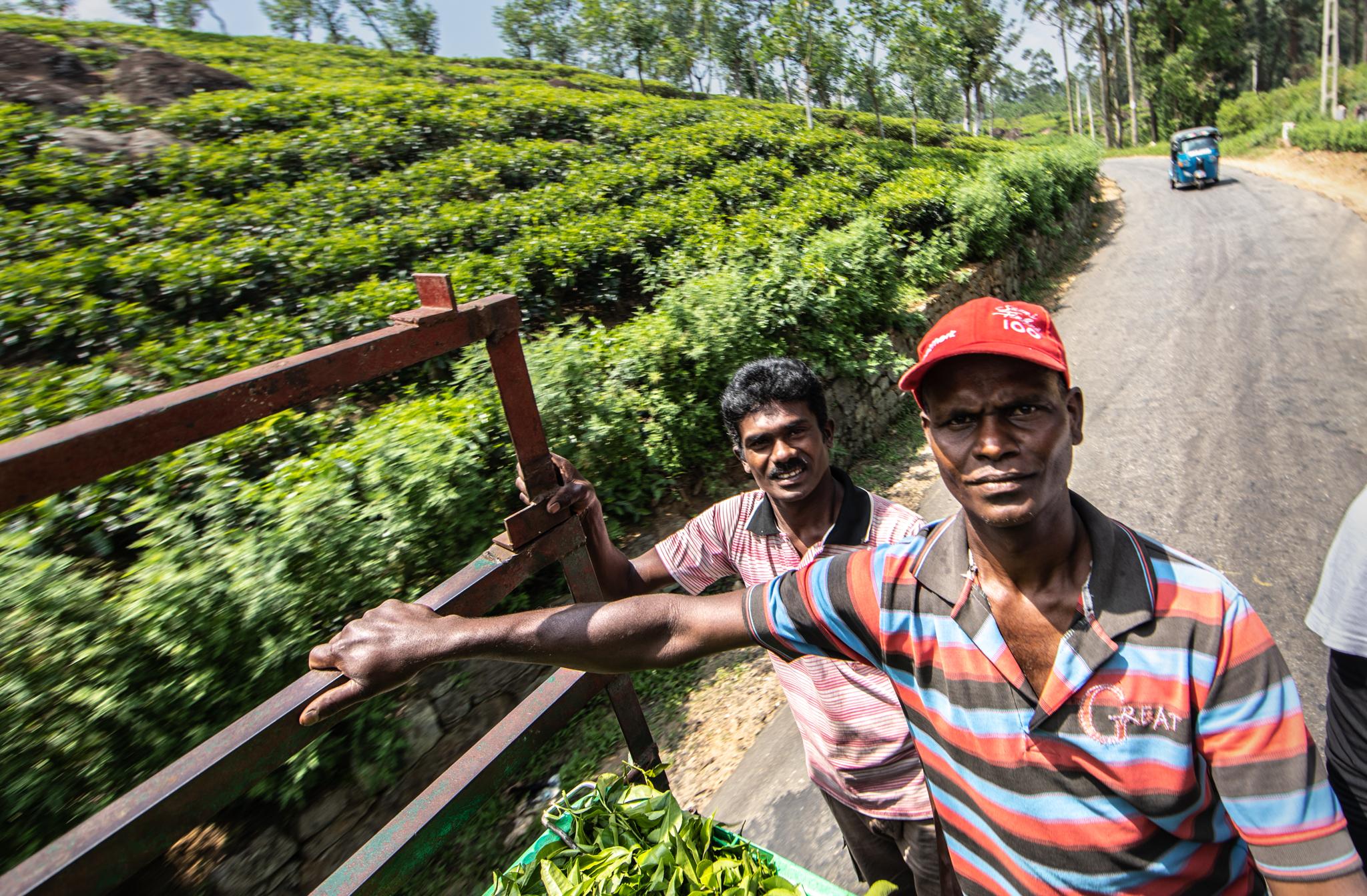tea piakcers website finals (13 of 29)