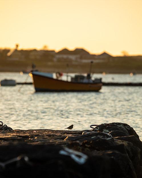 Sparrow at Les Amarreurs Bay