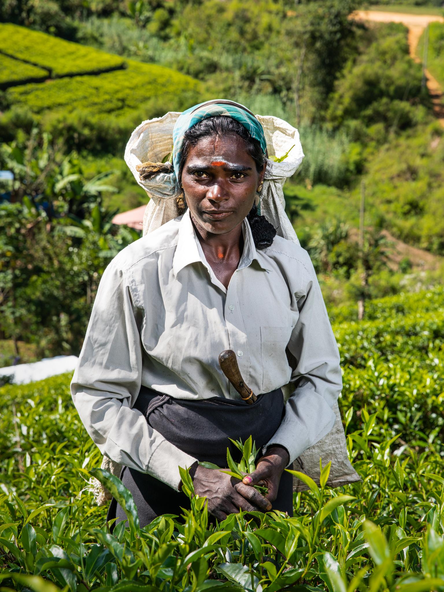 tea piakcers website finals (24 of 29)