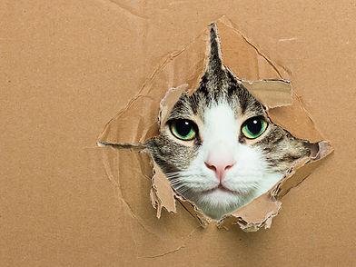Traslocare con i gatti- Traslochi Globo Italia Roma