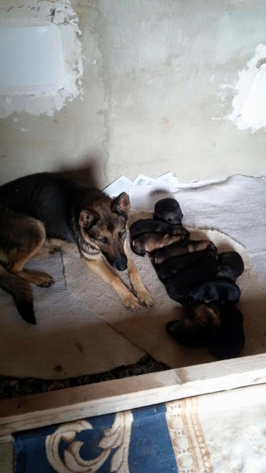 Faye & Pups