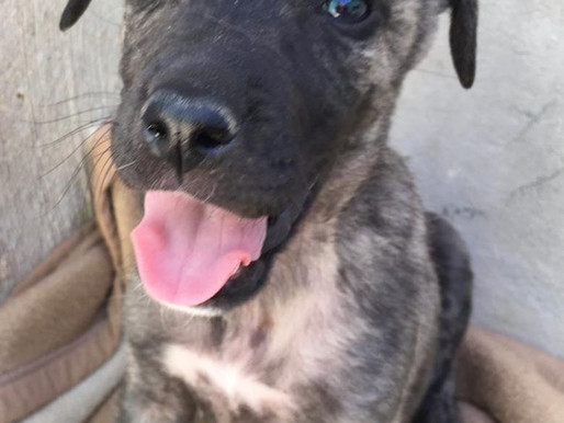 Dogs for adoption update.