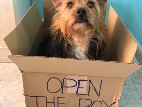 Open the box!!!