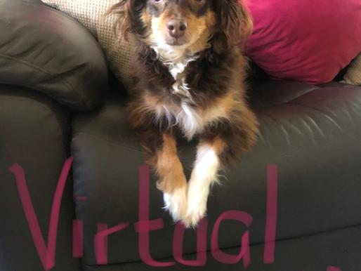 Virtual Charity Dog Walk 2!!