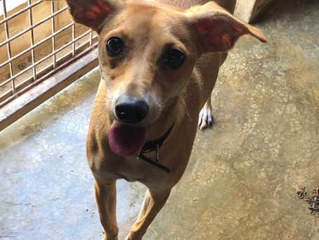 Updated Dogs for Adoption page.