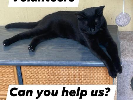 Cattery Volunteers.