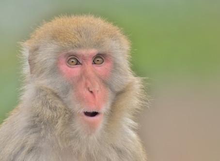 [動物占い]サルの基本性格や相性は?恋愛傾向や仕事の適職を解説!