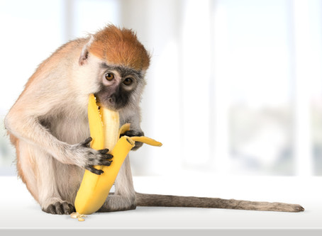 「さるはバナナ好き」は本当? ニホンザルの好きな食べ物