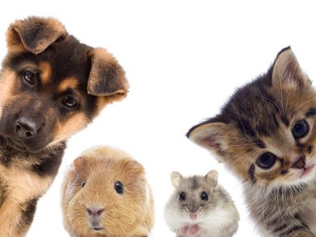 癒し動画で癒されよう!可愛すぎな動物たちの動画をご紹介!
