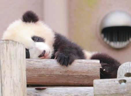 とにかくかわいい!動物の赤ちゃん特集!