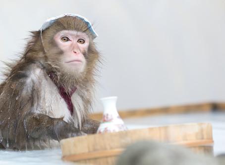 東京近郊で動物とふれあいたい!おすすめのカフェ、動物園、テーマパーク