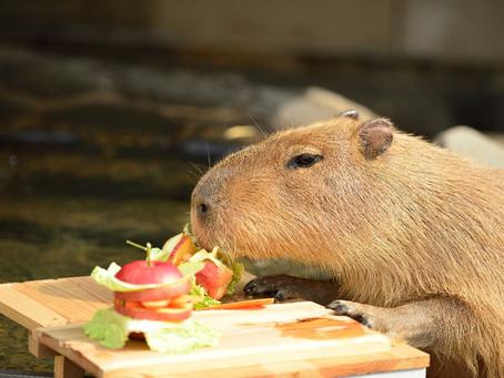 ハマる人続出!動物たち可愛いASMR動画を大紹介!