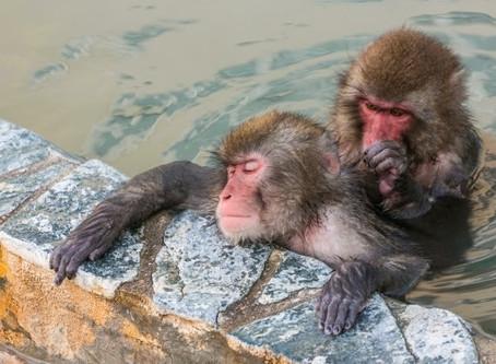猿はなぜ仲間同士で毛づくろいするの?