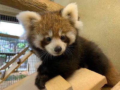 お家で動物園!動物たちをライブカメラで見てみよう