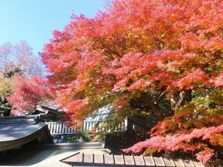 京王線で都心からすぐ!日光さる軍団も楽しめる今が旬の高尾山の紅葉を見に行こう!