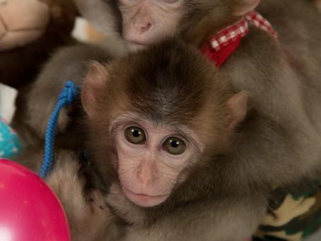 小猿の1日のスケジュール、好きな食べ物と飼育の注意点