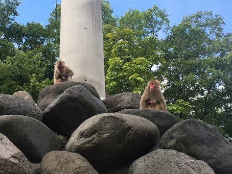 猿山の発見⭐️
