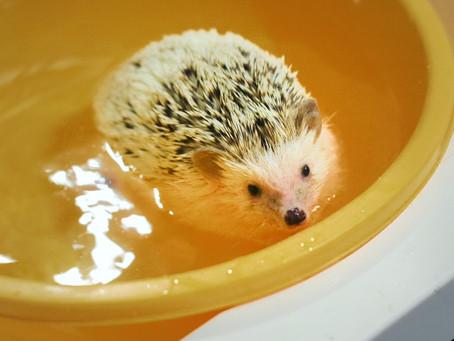 寒い時期はお風呂で温まりたい動物たちのお風呂動画を紹介!