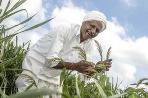 Revival tale Farmer Ramji Yelappa cultivates the crop; (below) millet bhakris on a platter   | Photo Credit: Jagadish Mandya