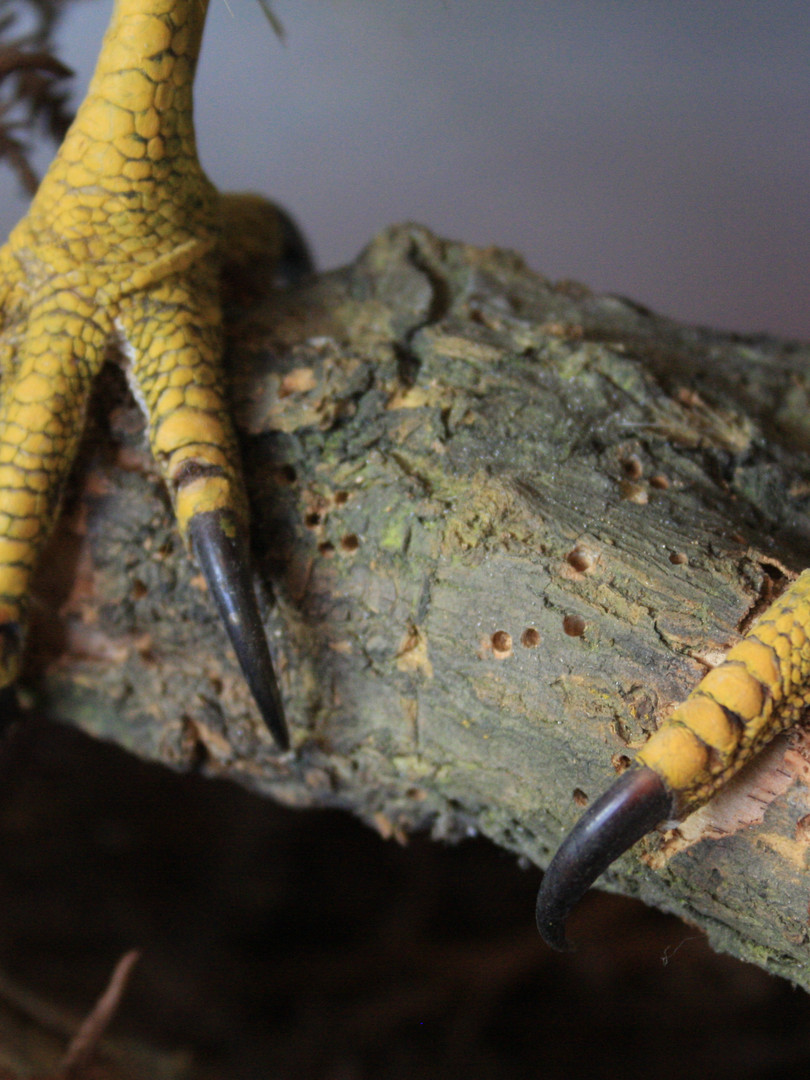 Pest damage to taxidermy support