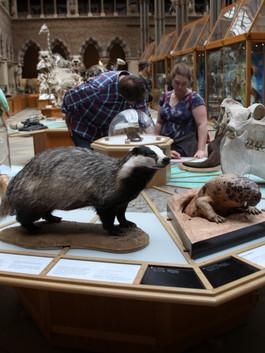 Sensing Evolution exhibition (mammals)