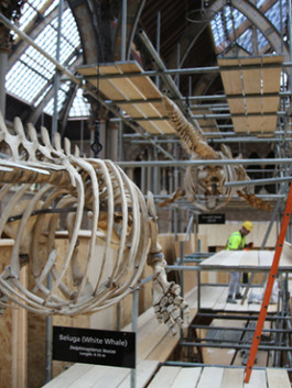 Rigging the specimens into position