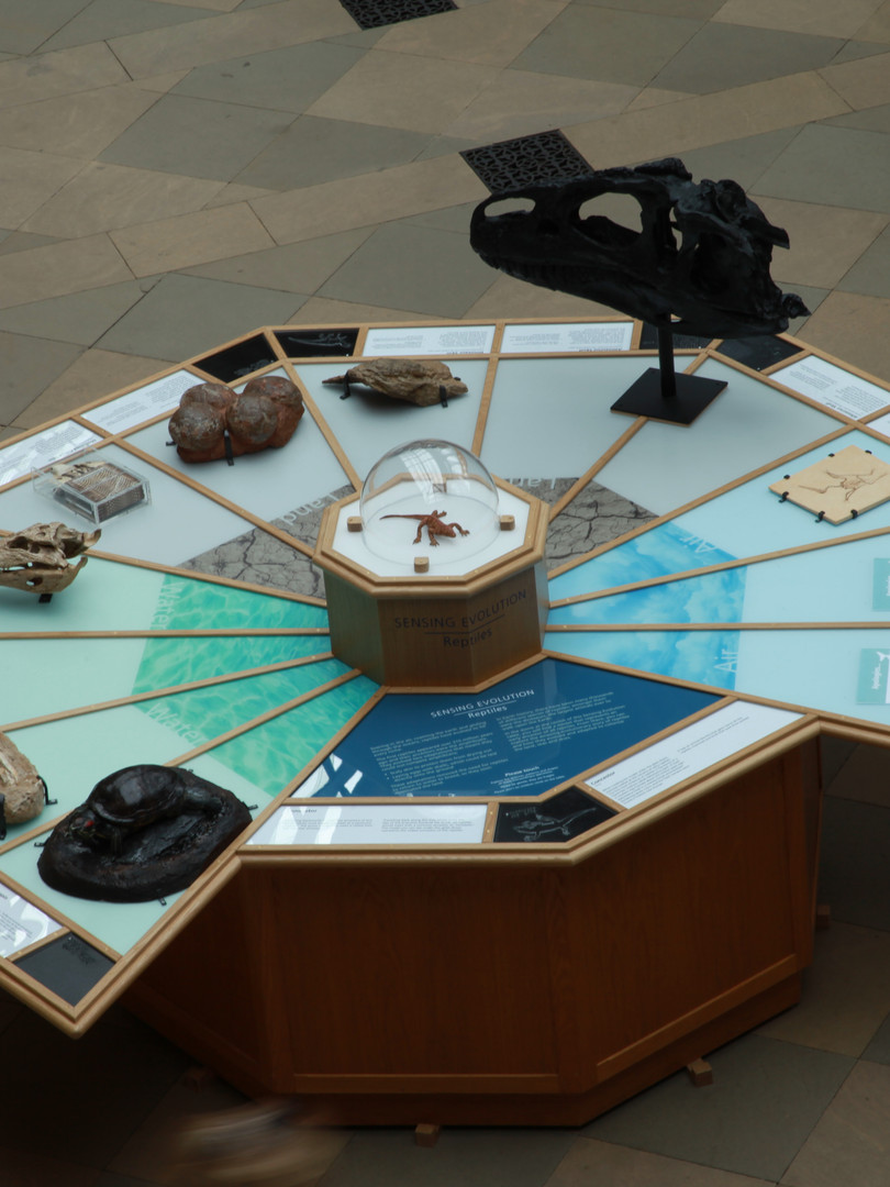 Sensing Evolution exhibition (reptiles)