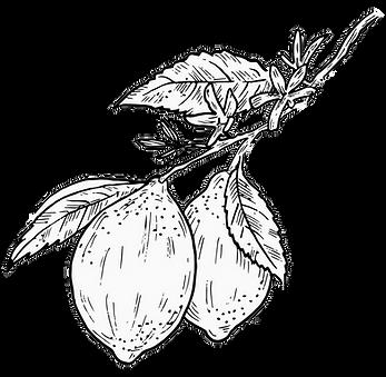 Lemondraw7.png