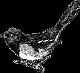 free-vintage-digi-stamp_cute-bird.png