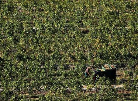Un élu de Marmande marche contre le suicide des agriculteurs.