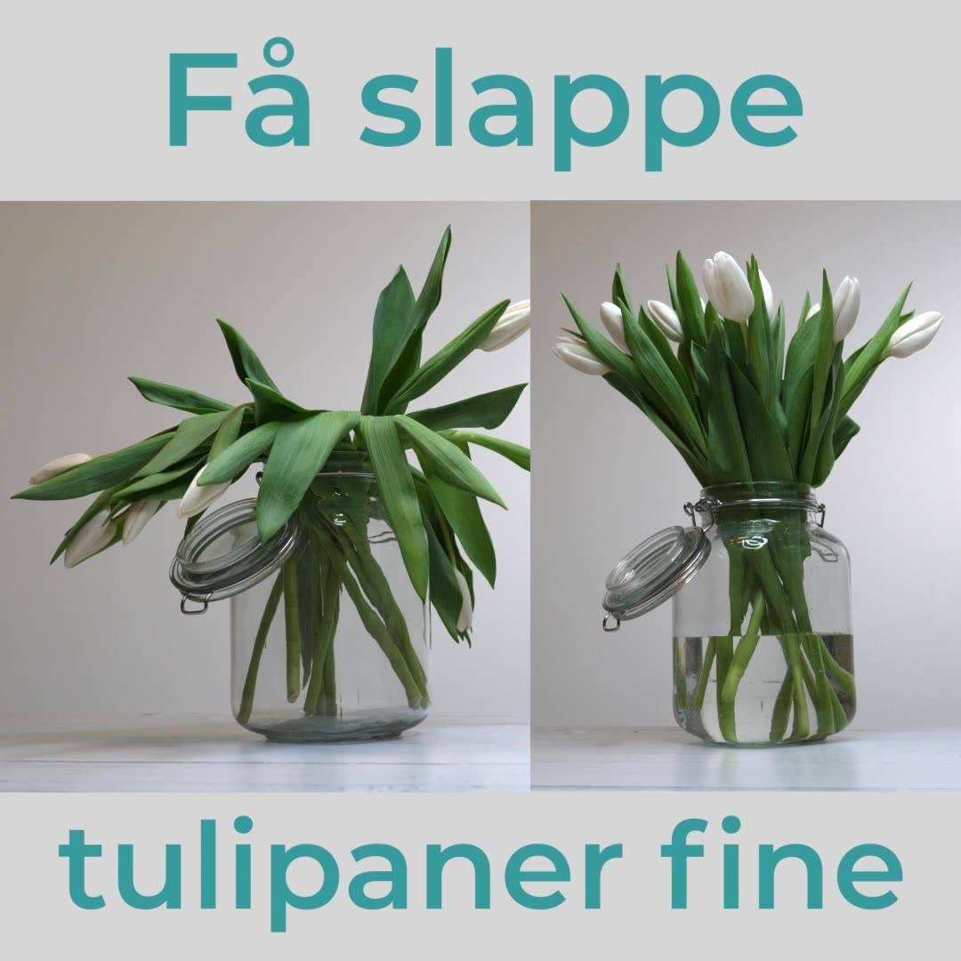 Trikset som retter opp slappe tulipaner
