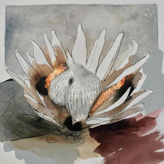 Mauve Protea