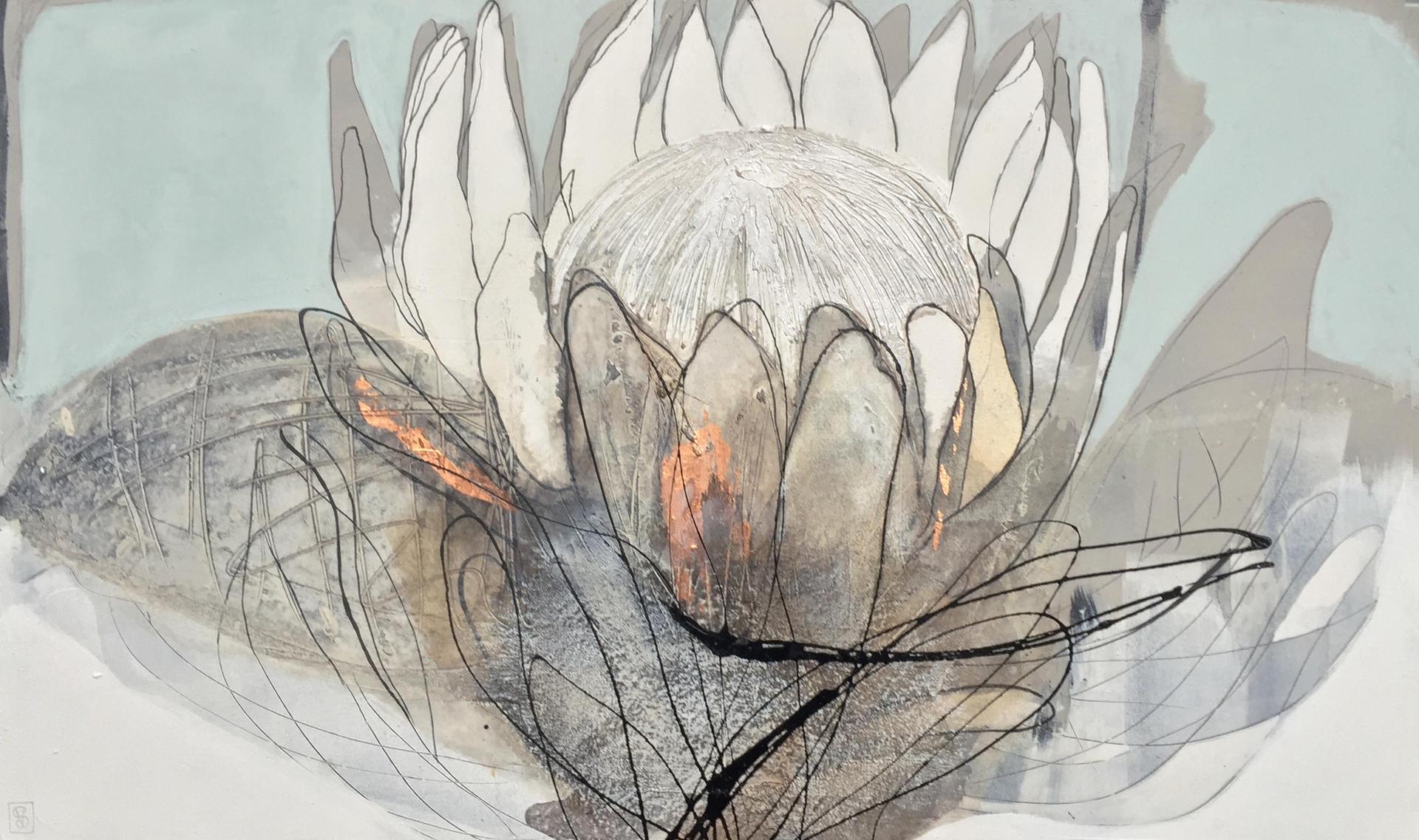 duckegg protea #1