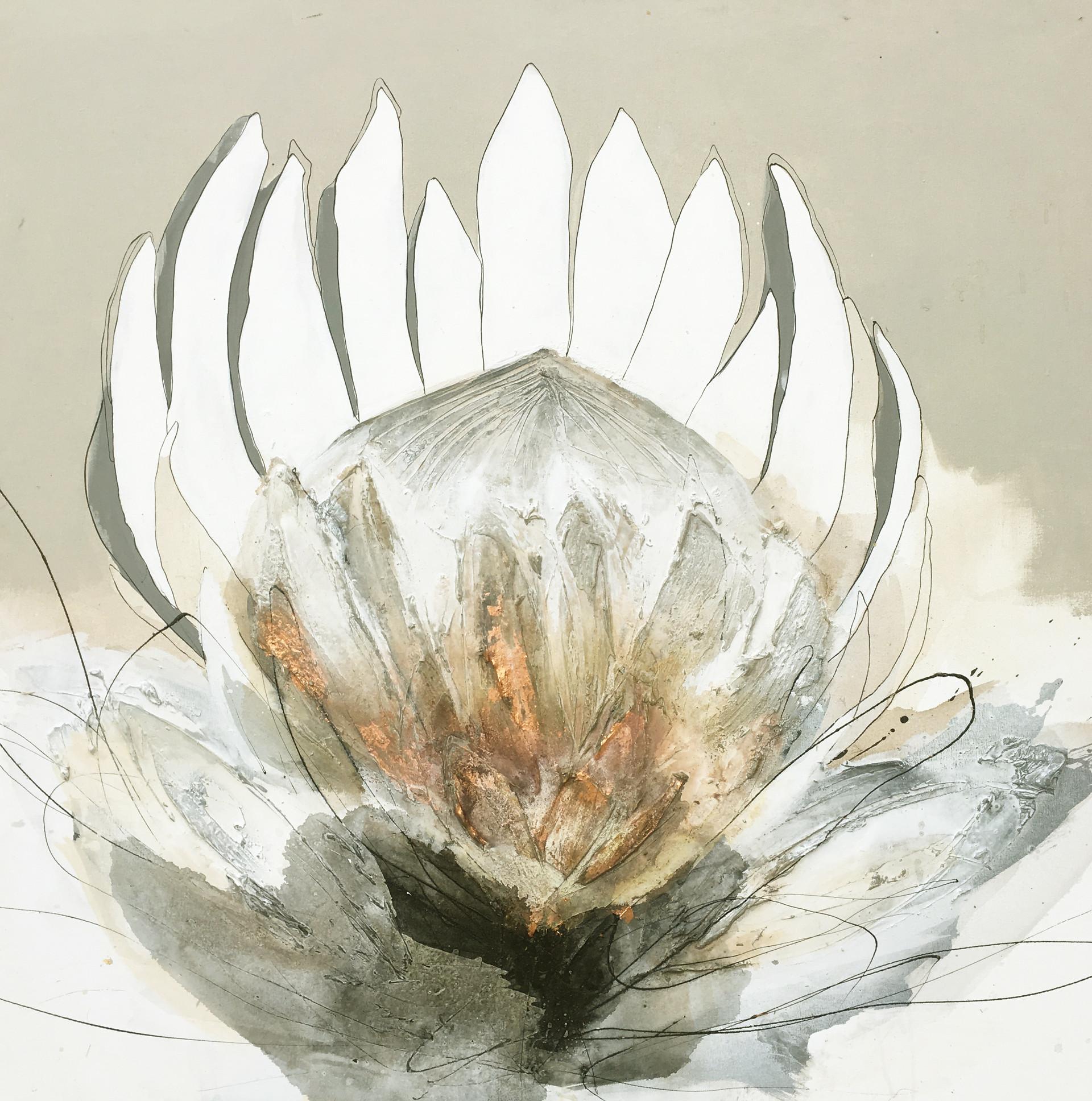 Black and copper protea #2