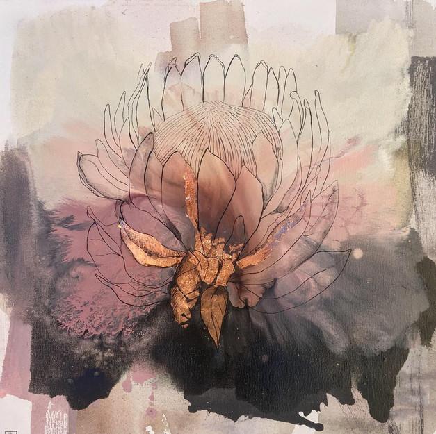 Pink protea #1