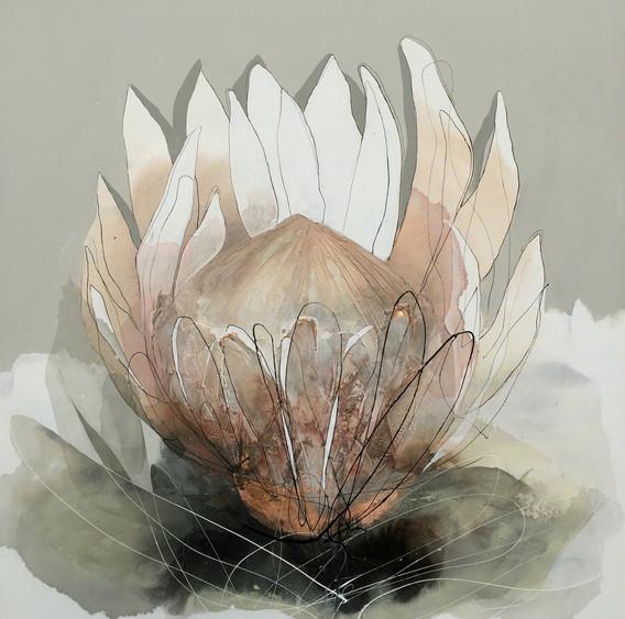 Dusty rose protea