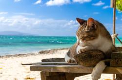 カイジ浜のねこ