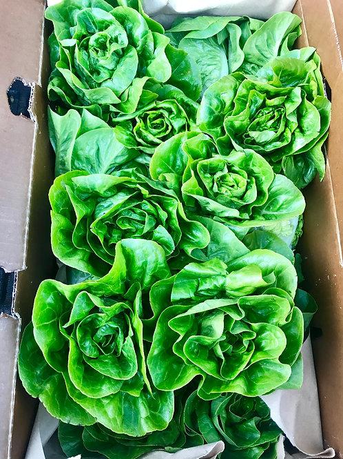 Little Gem Lettuce, Organic