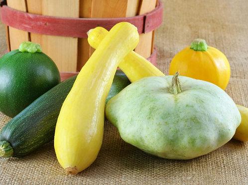 Summer Squash, Organic