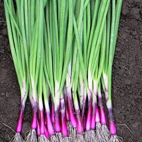 Spring Onion, Organic